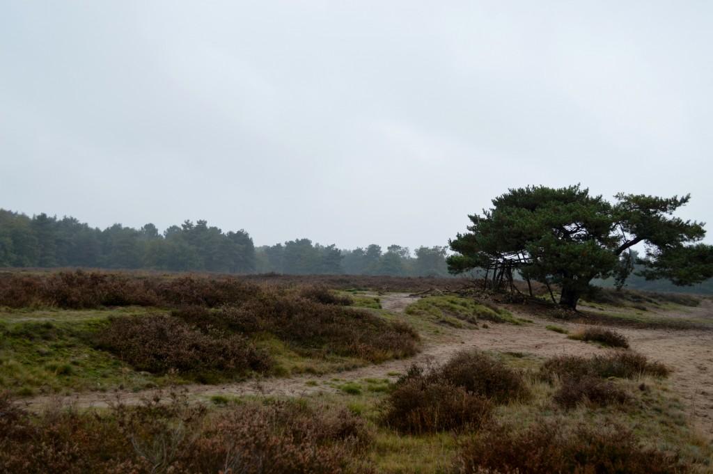 13.Regte Heide ('de boom' met overzicht) breed