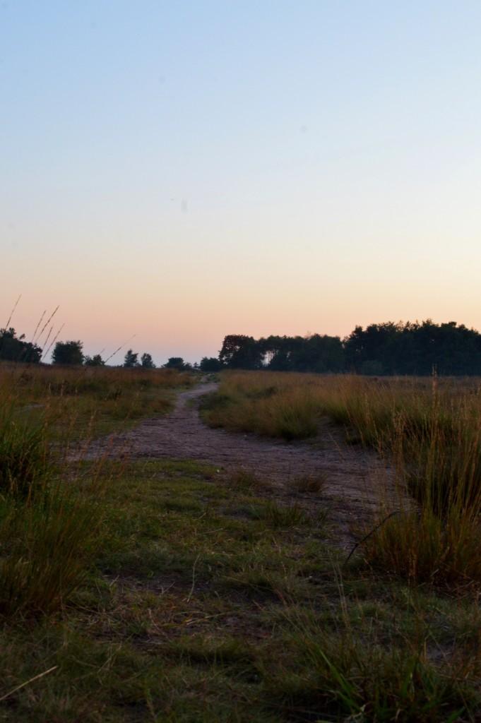 8.Regte Heide (zandpad) hoog